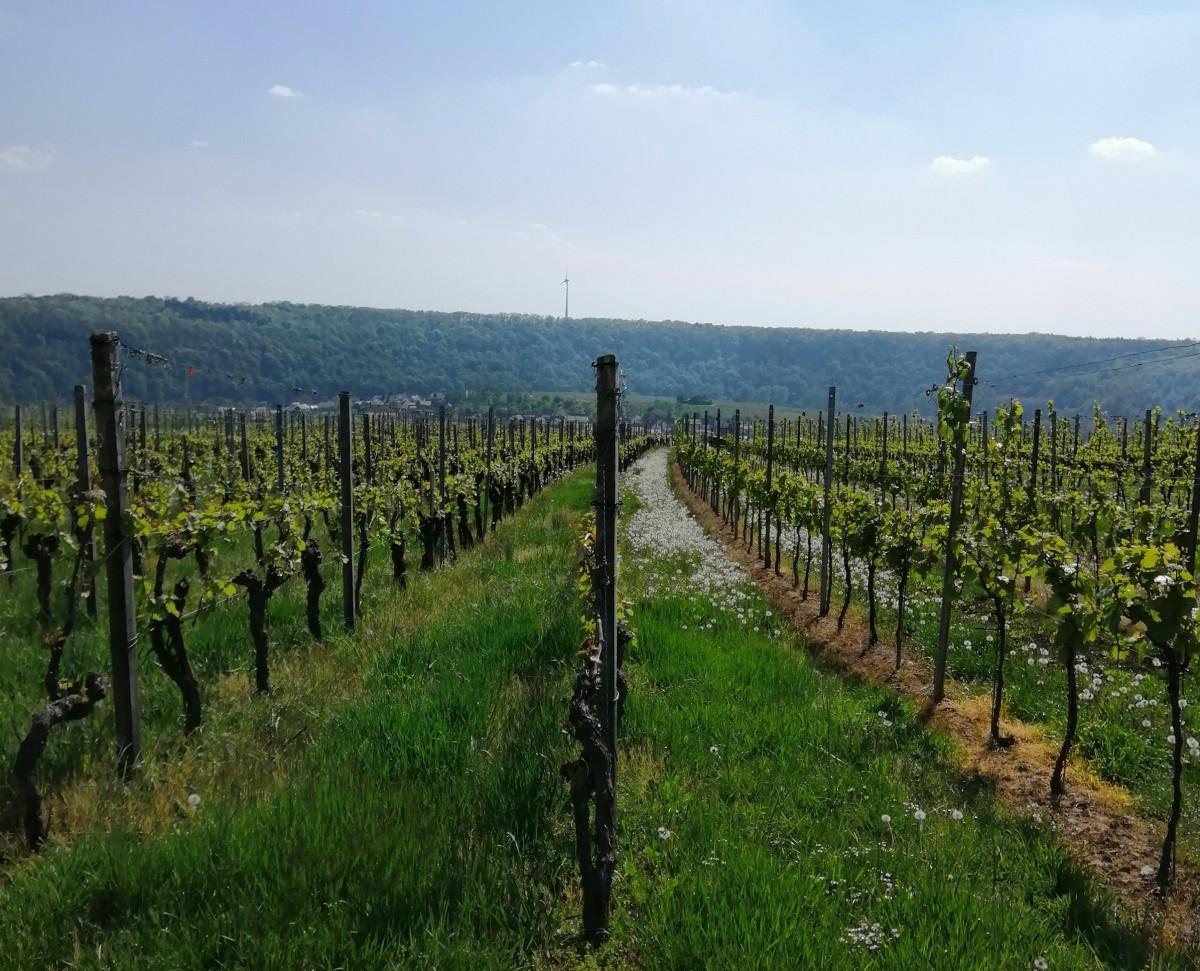 Tipps für Ausflüge in Baden-Württemberg